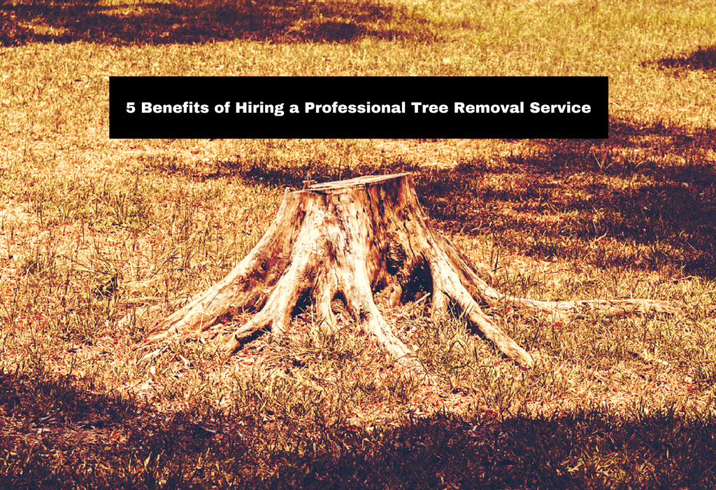 5-benefits-of-hiring-a-professional-tree-removal-service